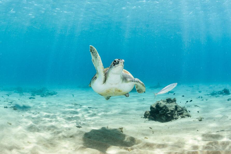Tips voor een actieve vakantie op Curaçao
